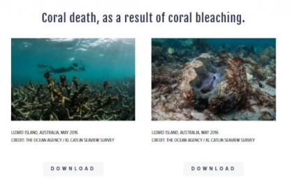The Great Barrier Reef Officially Announced Dead In
